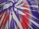 Close-up Deep Purple & Poppy Red