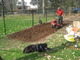When done tilling, add fertilizer and manure.