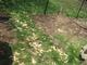 Small grassy area in backyard